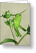 Bird Grasshopper Nymph Greeting Card