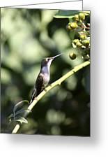 Bird - Hummingbird - The Observer Greeting Card