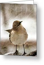Bird In A Bag Greeting Card by Skip Willits