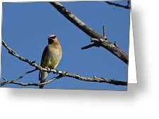 Bird In Tree Greeting Card