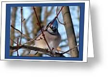 Bird Of Blue Greeting Card