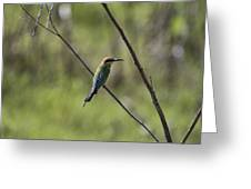 Bird Of Color Greeting Card