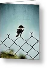 Bird On A Fence  Greeting Card