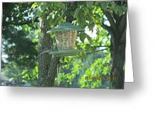 Bird On Full Feeder Greeting Card