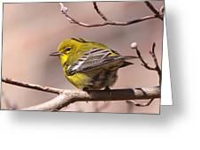 Bird - Pine Warbler - Detail Greeting Card