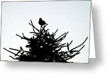 Bird Silhouette  Greeting Card