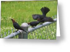 Bird Trio Greeting Card