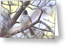 Bird - Tufted Titmouse - Busted Greeting Card