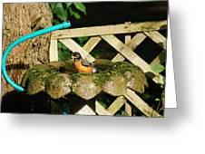 Birdbath Shower  Ll Greeting Card