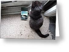 Birding Cat One Greeting Card