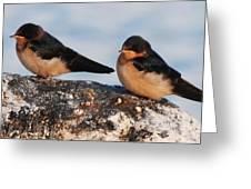 Birding Greeting Card