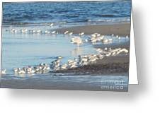 Birds And One Lone Seagull. Greeting Card
