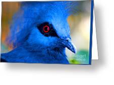 Bird's Eye View Greeting Card