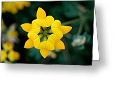 Bird's Foot Trefoil Greeting Card