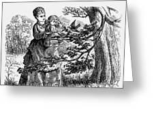 Birds Nest, 1873 Greeting Card