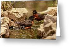 Birds Of A Feather Swim Together Greeting Card by Inspired Nature Photography Fine Art Photography