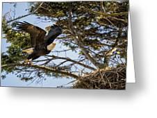 Birds Of Bc - No.27 - Bald Eagle - Haliaeetus Leucocephalus Greeting Card