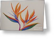 Birds Of Paradise II Greeting Card