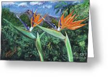 Birds Of Paradise Greeting Card