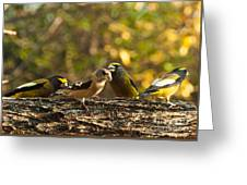 Birds Of Yellow Greeting Card