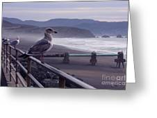 Birds On A Rail II Greeting Card