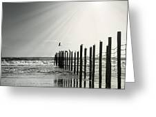 Birds On Outer Banks Greeting Card