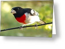 Birds Rose Breasted Grosbeak Greeting Card