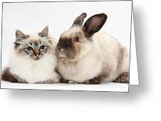 Birman Cat And Colorpoint Rabbit Greeting Card