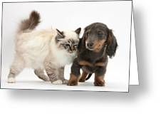 Birman Cat And Dachshund Puppy Greeting Card