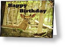 Birthday Greeting Card - Whitetail Deer Buck In Velvet Greeting Card
