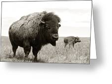 Bison And Calf Greeting Card by Olivier Le Queinec