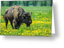 Bison And Friend Greeting Card