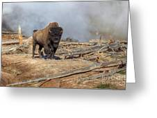 Bison And Geyser Greeting Card