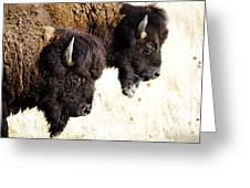 Bison Bison Greeting Card