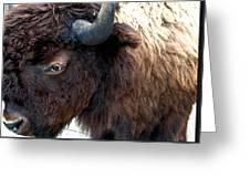 Bison Bison Up Close Greeting Card