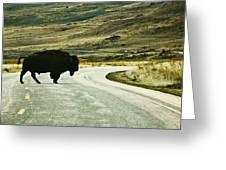 Bison Crossing Highway Greeting Card