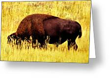 Bison In Field Greeting Card