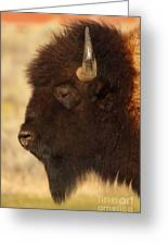 Bison In Profile Greeting Card