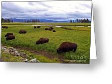 Bison-land Greeting Card