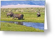 Bison On Big Spring Creek Greeting Card