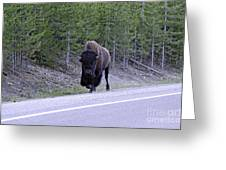 Bison On Road Greeting Card