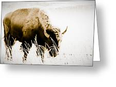 Bison Winter Greeting Card