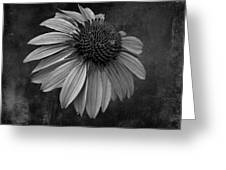 Bittersweet Memories - Bw Greeting Card
