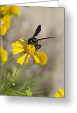 Bitterweed And Black Wasp Greeting Card
