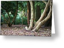 Bizarre Trees Greeting Card by Angela Doelling AD DESIGN Photo and PhotoArt