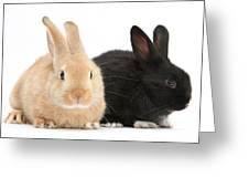 Black And Sandy Rabbits Greeting Card
