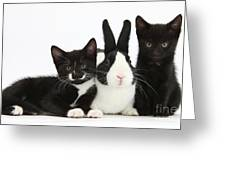 Black And Tuxedo Kittens With Dutch Greeting Card