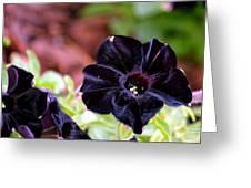 Black And Velvety Greeting Card