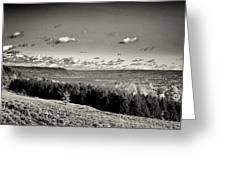 Black And White Above The Vines  Greeting Card by Joshua House