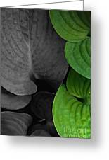 Black And White And Green Leaves Greeting Card